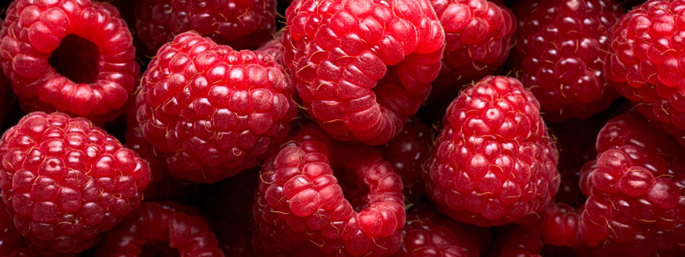 Quelle Cloison isotherme agroalimentaire utiliser ?